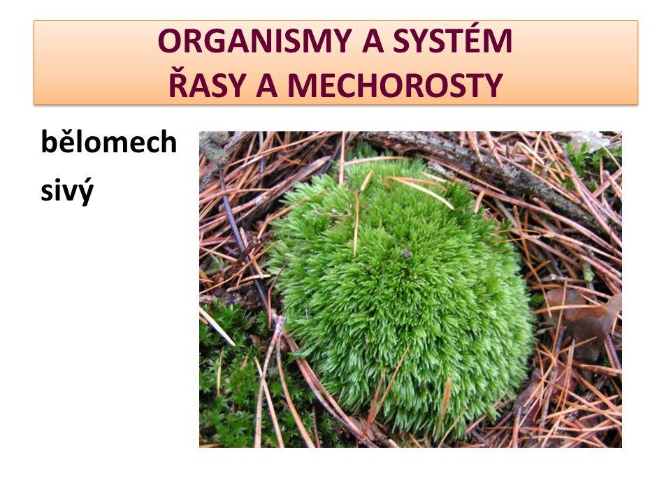 ORGANISMY A SYSTÉM ŘASY A MECHOROSTY