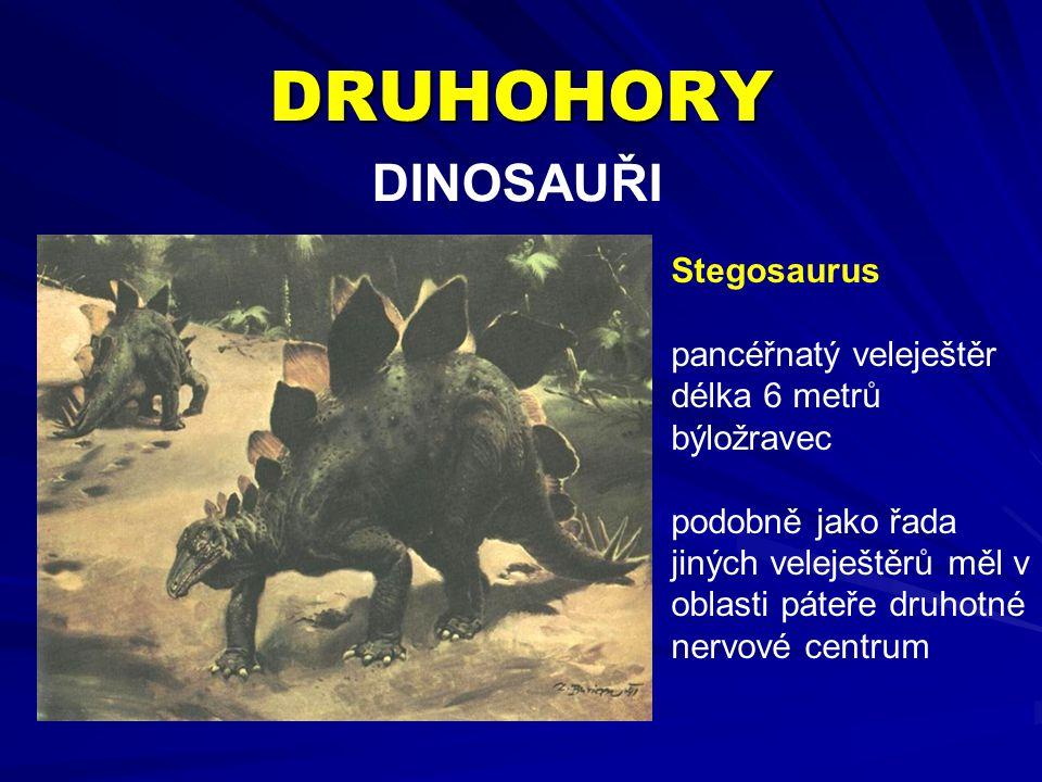DRUHOHORY DINOSAUŘI Stegosaurus pancéřnatý veleještěr délka 6 metrů