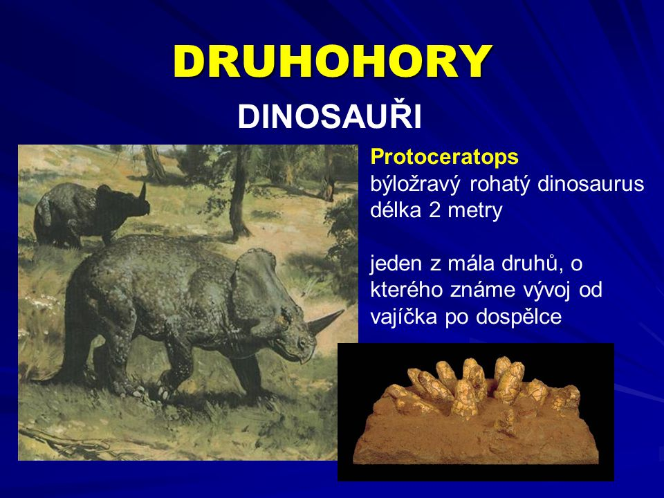 DRUHOHORY DINOSAUŘI Protoceratops býložravý rohatý dinosaurus