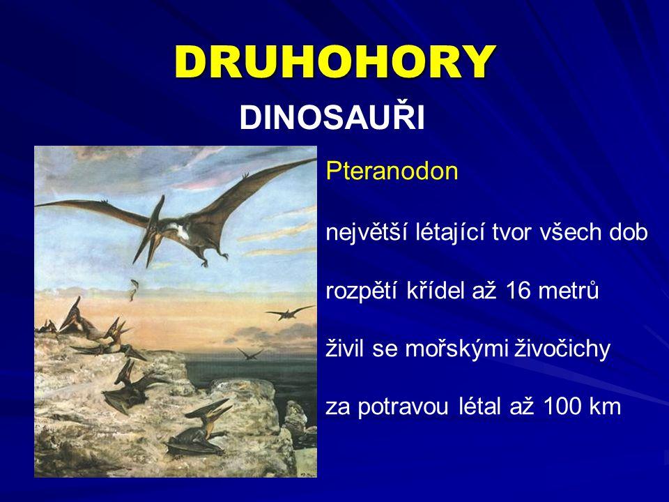 DRUHOHORY DINOSAUŘI Pteranodon největší létající tvor všech dob