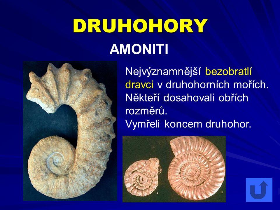 DRUHOHORY AMONITI. Nejvýznamnější bezobratlí dravci v druhohorních mořích. Někteří dosahovali obřích rozměrů.