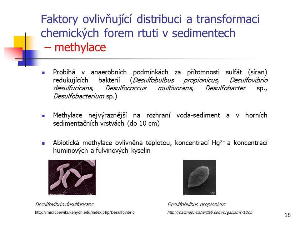 Faktory ovlivňující distribuci a transformaci chemických forem rtuti v sedimentech – methylace