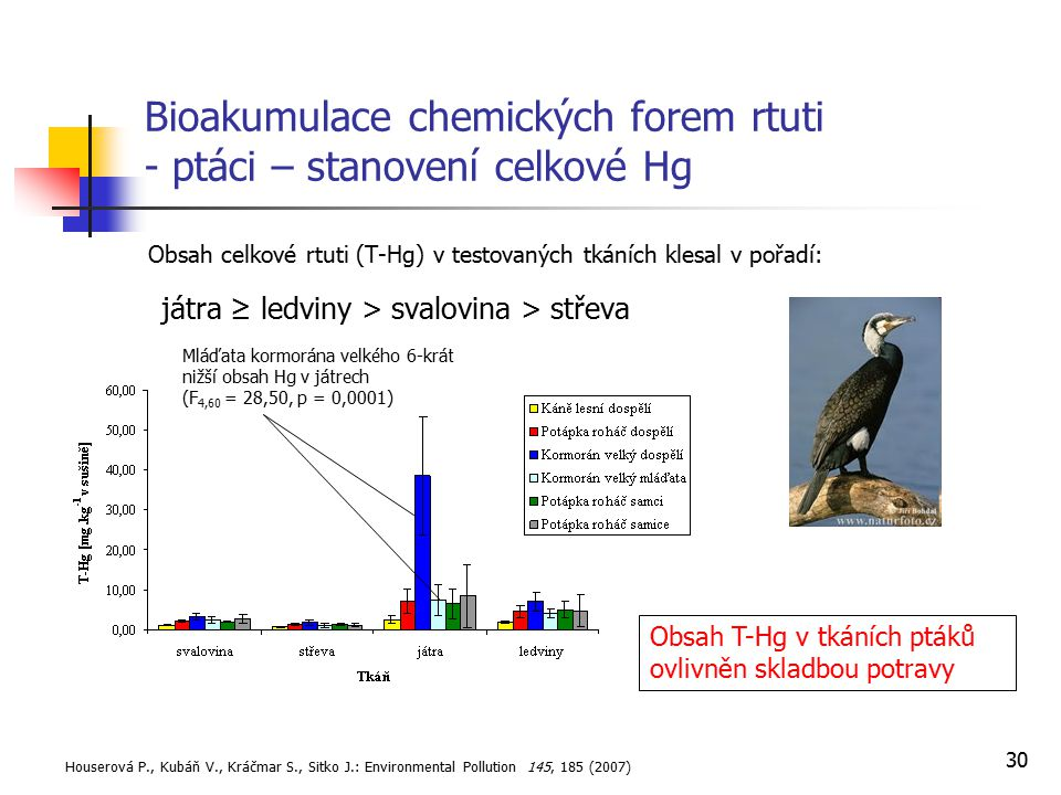 Bioakumulace chemických forem rtuti - ptáci – stanovení celkové Hg
