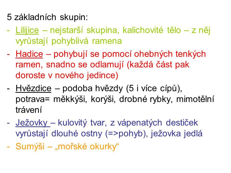 5 základních skupin: Lilijice – nejstarší skupina, kalichovité tělo – z něj vyrůstají pohyblivá ramena.