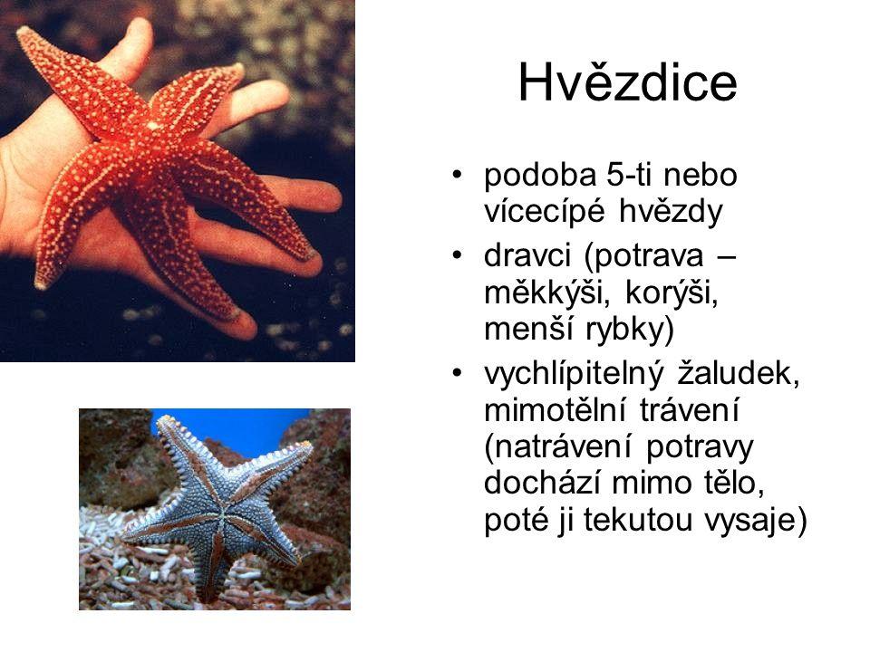 Hvězdice podoba 5-ti nebo vícecípé hvězdy