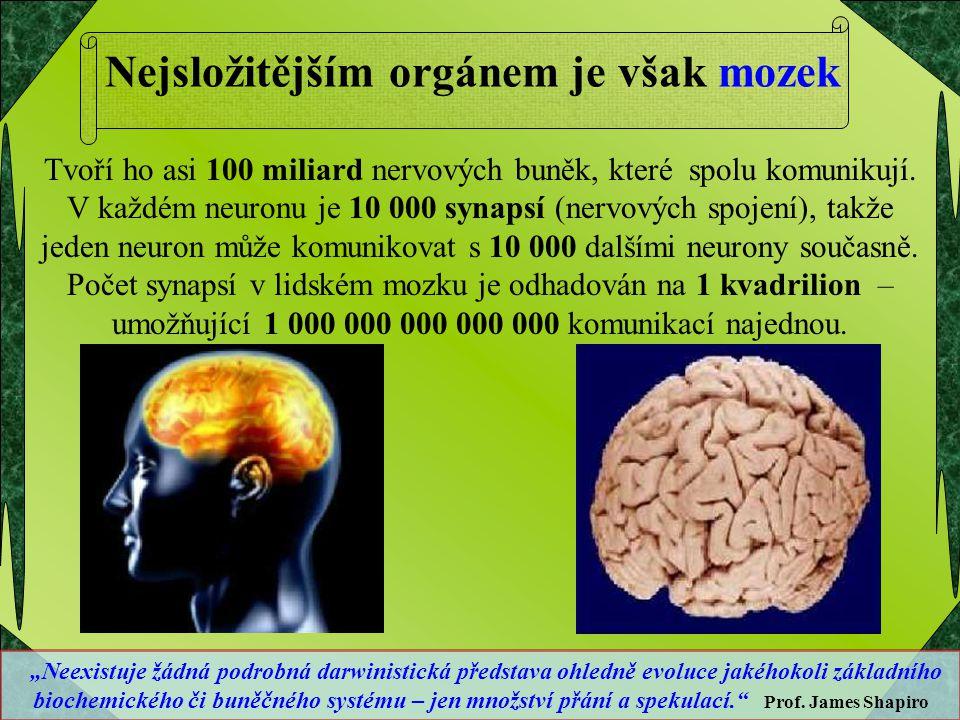 Nejsložitějším orgánem je však mozek