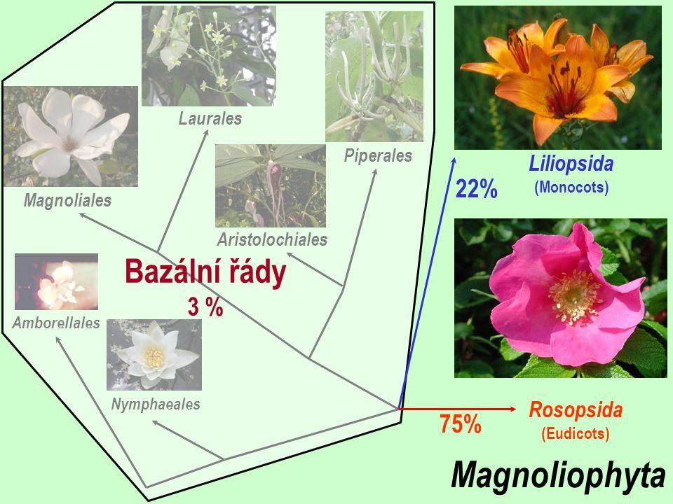 Liliopsida (Monocots)
