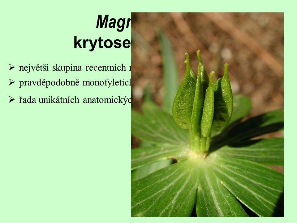 Magnoliophyta krytosemenné rostliny