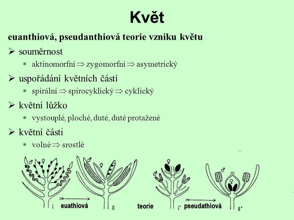 Květ euanthiová, pseudanthiová teorie vzniku květu souměrnost