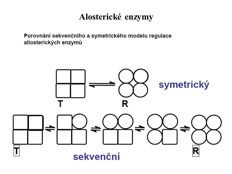 Alosterické enzymy