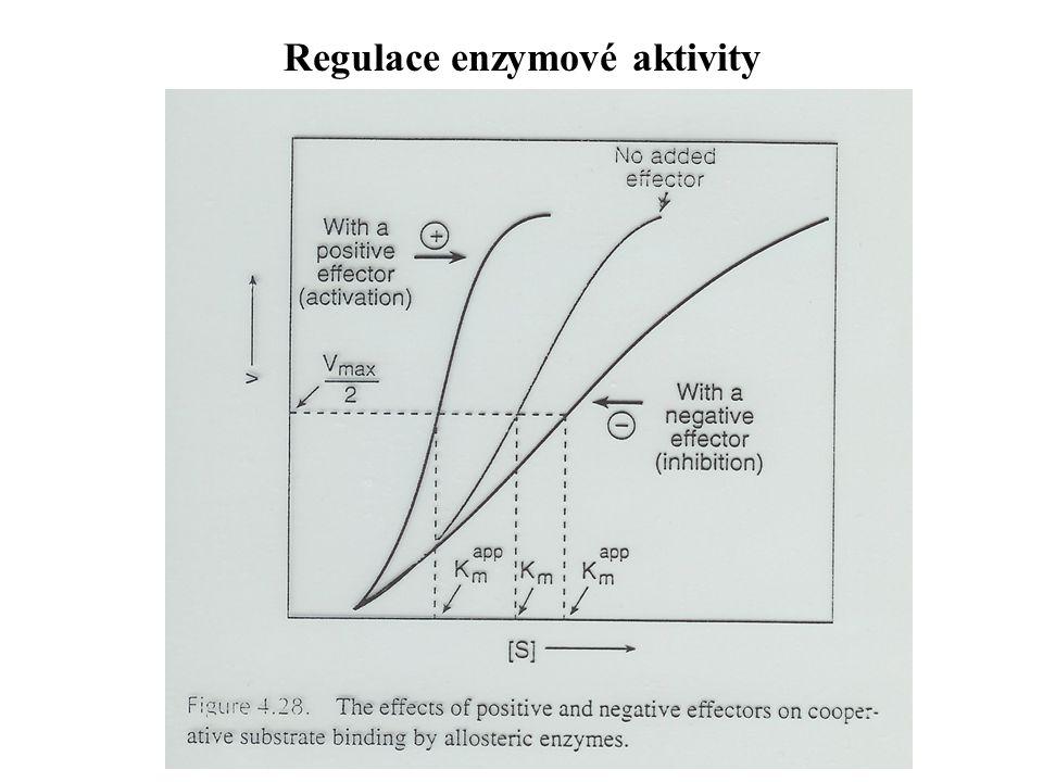 Regulace enzymové aktivity