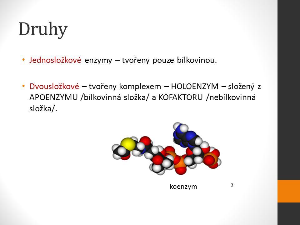 Druhy Jednosložkové enzymy – tvořeny pouze bílkovinou.