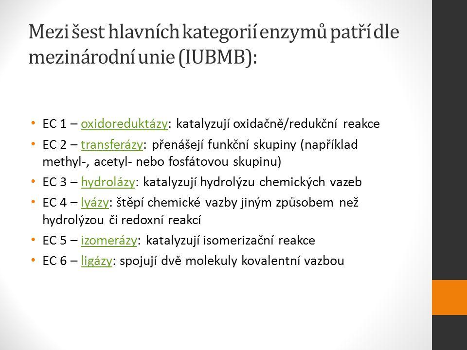 Mezi šest hlavních kategorií enzymů patří dle mezinárodní unie (IUBMB):
