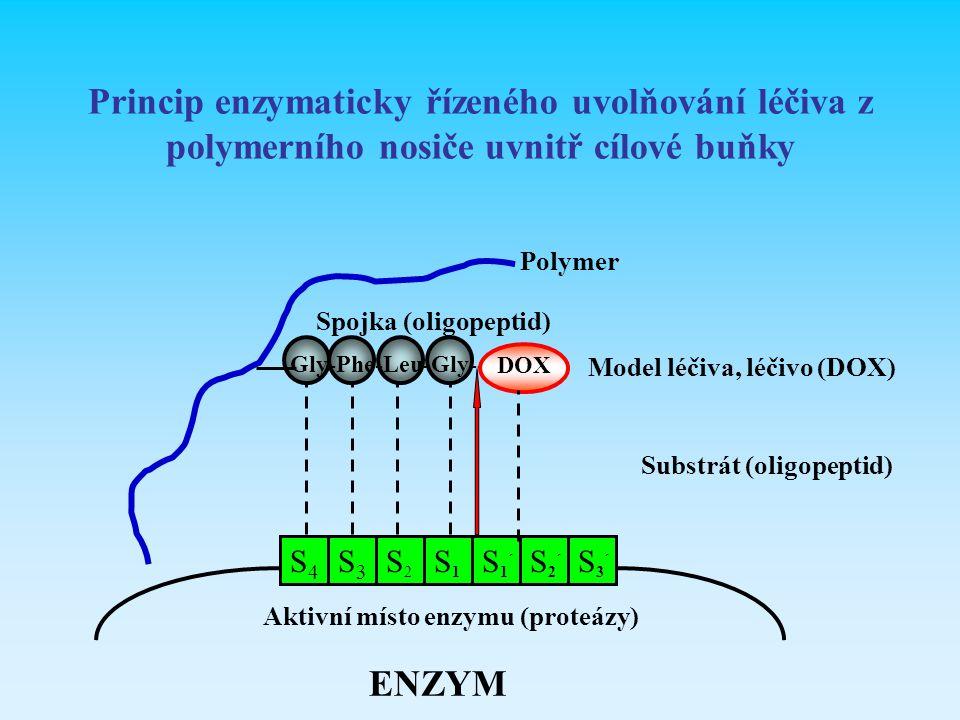 Princip enzymaticky řízeného uvolňování léčiva z polymerního nosiče uvnitř cílové buňky