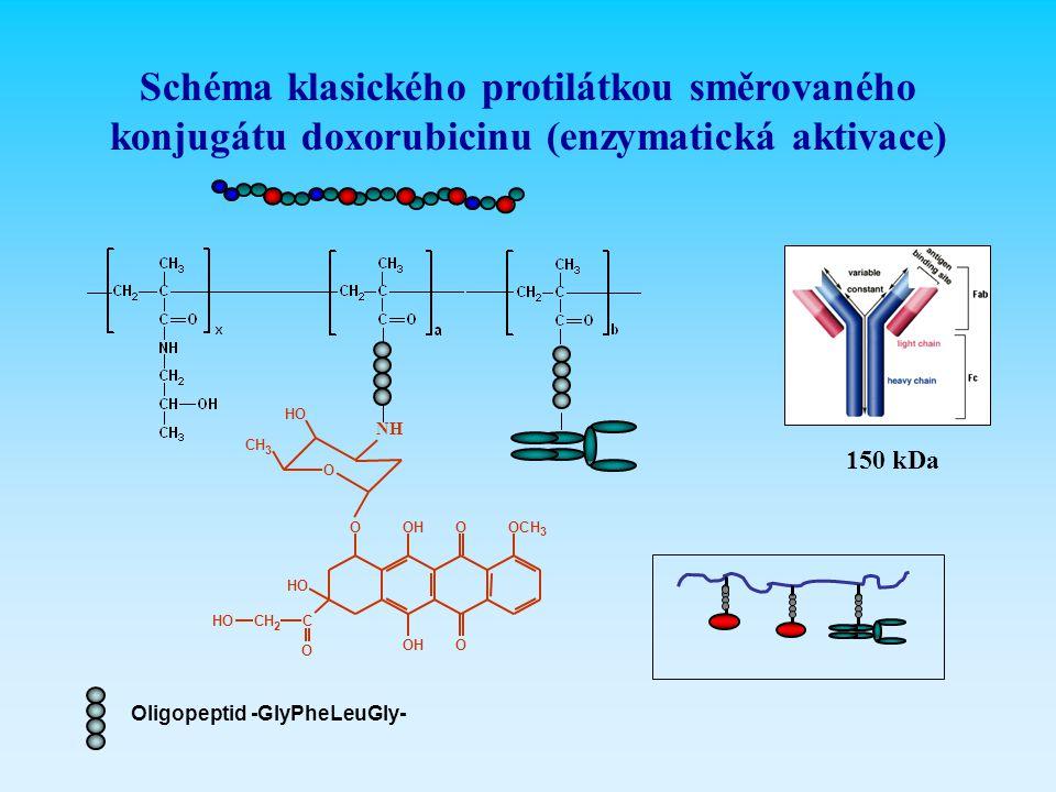 Schéma klasického protilátkou směrovaného konjugátu doxorubicinu (enzymatická aktivace)