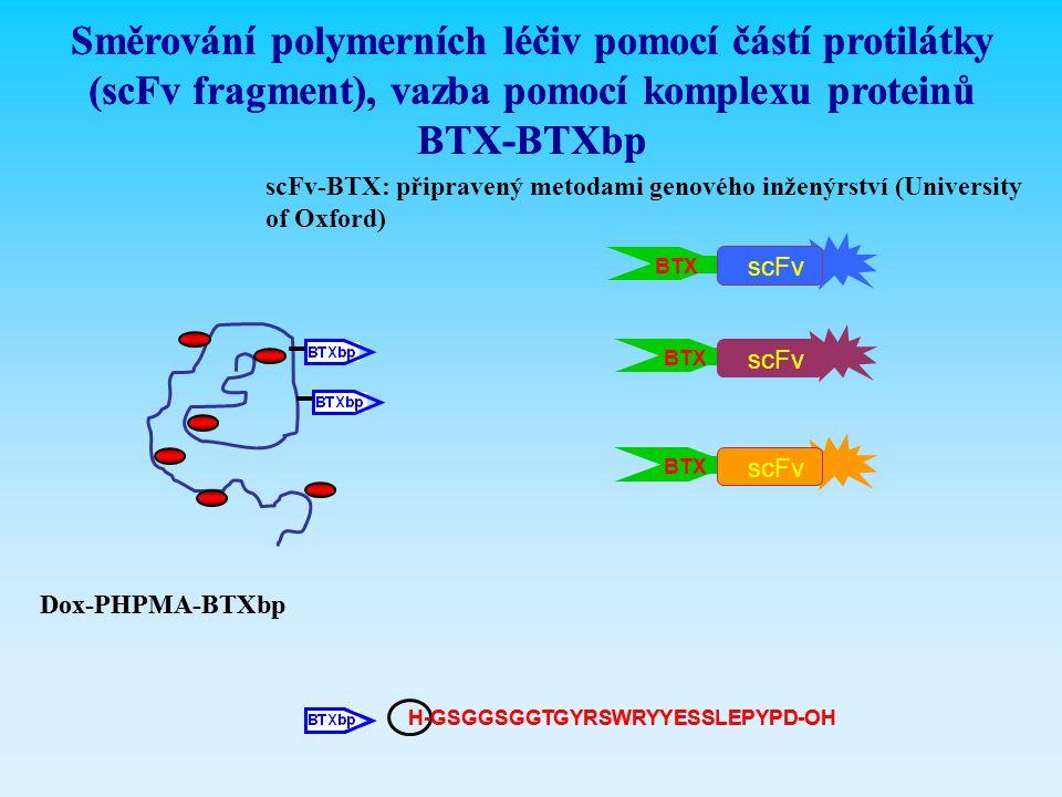 Směrování polymerních léčiv pomocí částí protilátky (scFv fragment), vazba pomocí komplexu proteinů BTX-BTXbp