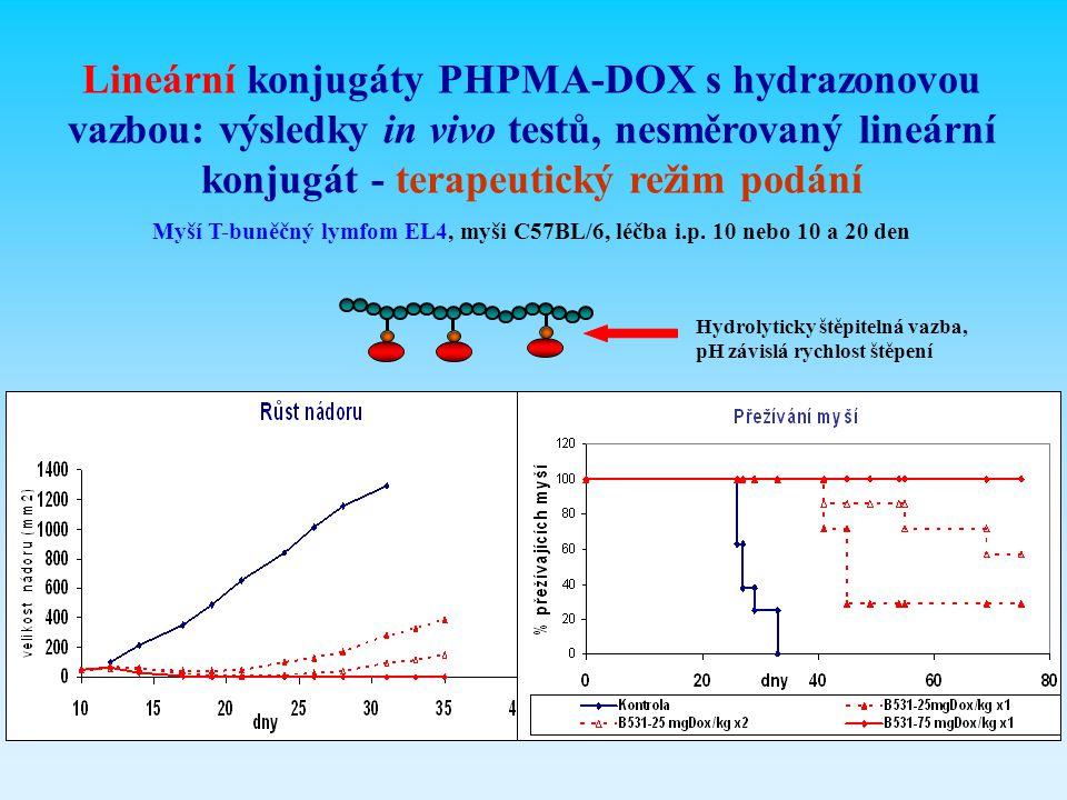 Lineární konjugáty PHPMA-DOX s hydrazonovou vazbou: výsledky in vivo testů, nesměrovaný lineární konjugát - terapeutický režim podání