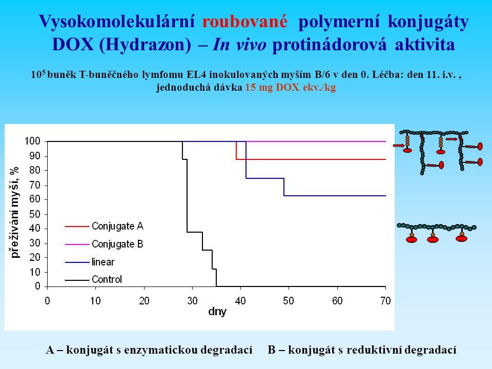 Vysokomolekulární roubované polymerní konjugáty DOX (Hydrazon) – In vivo protinádorová aktivita