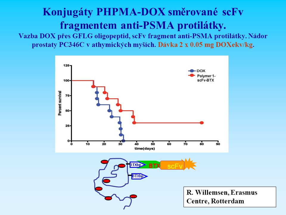 Konjugáty PHPMA-DOX směrované scFv fragmentem anti-PSMA protilátky