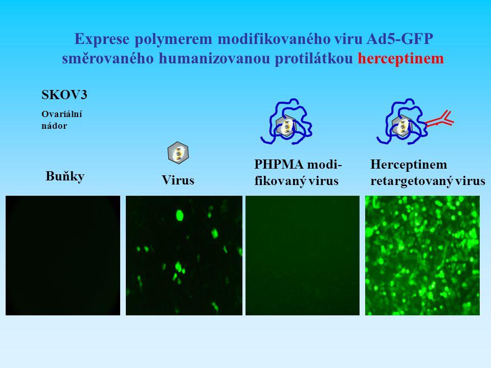 Exprese polymerem modifikovaného viru Ad5-GFP směrovaného humanizovanou protilátkou herceptinem