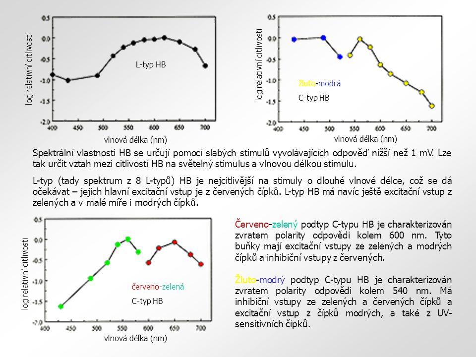 L-typ HB vlnová délka (nm) log relativní citlivosti. žluto-modrá. C-typ HB. log relativní citlivosti.