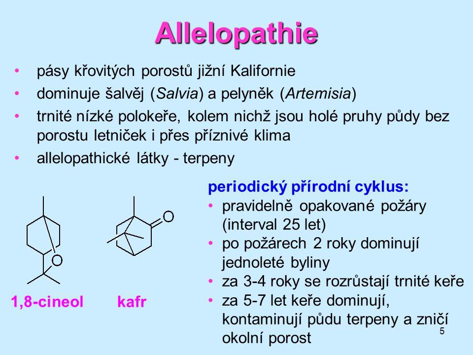 Allelopathie pásy křovitých porostů jižní Kalifornie