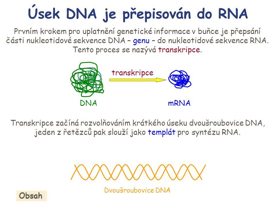 Úsek DNA je přepisován do RNA