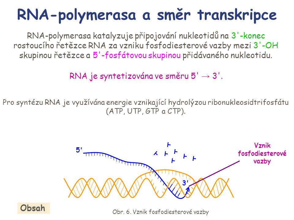 RNA-polymerasa a směr transkripce