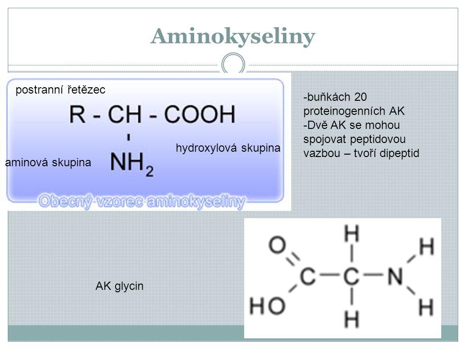 Aminokyseliny postranní řetězec buňkách 20 proteinogenních AK