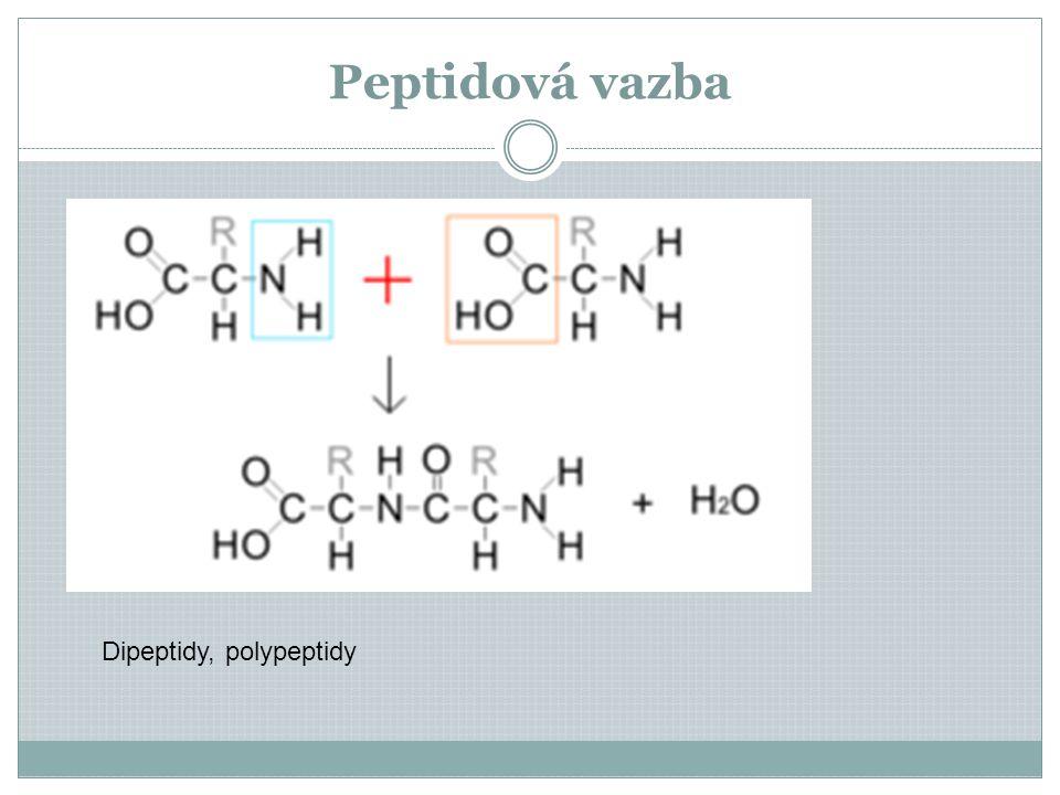 Peptidová vazba Dipeptidy, polypeptidy