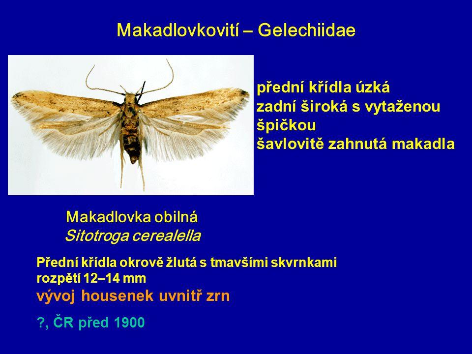 Makadlovkovití – Gelechiidae