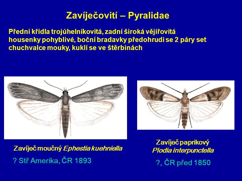 Zavíječovití – Pyralidae