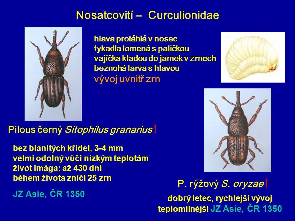 Nosatcovití – Curculionidae