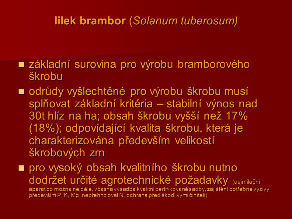 lilek brambor (Solanum tuberosum)