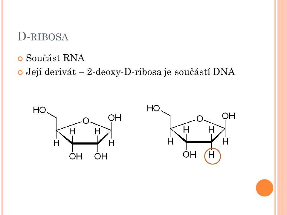 D-ribosa Součást RNA Její derivát – 2-deoxy-D-ribosa je součástí DNA