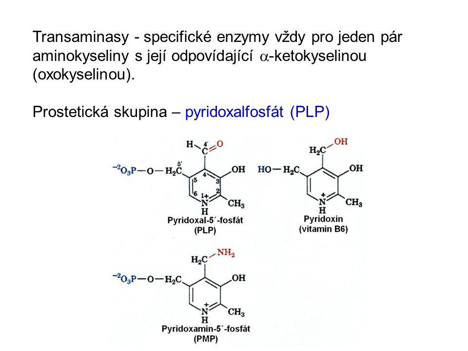 Transaminasy - specifické enzymy vždy pro jeden pár aminokyseliny s její odpovídající a-ketokyselinou (oxokyselinou).