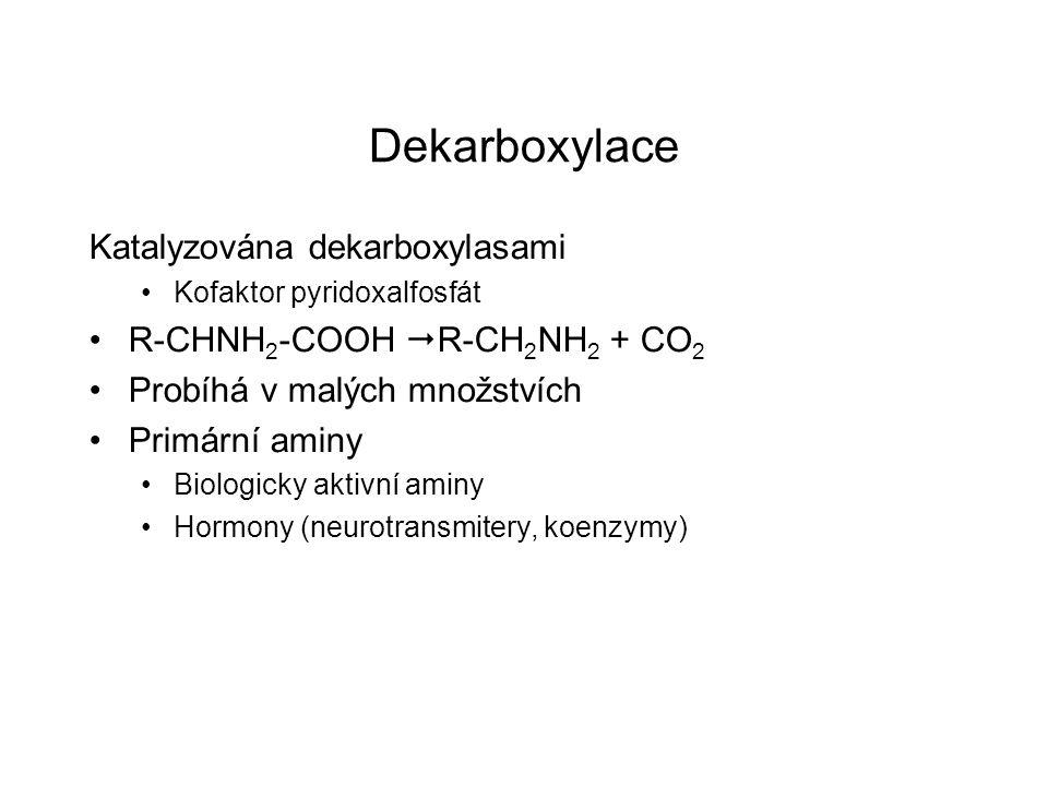 Dekarboxylace Katalyzována dekarboxylasami