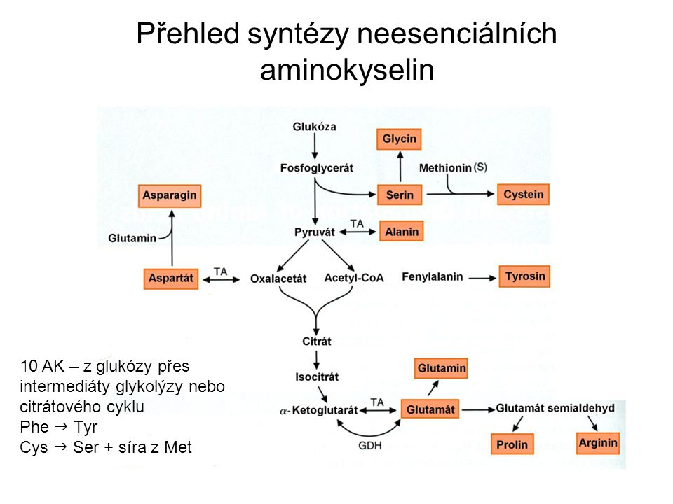 Přehled syntézy neesenciálních aminokyselin