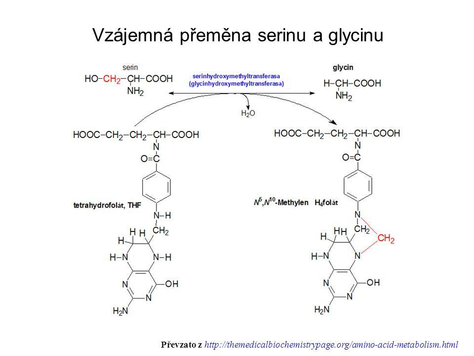 Vzájemná přeměna serinu a glycinu