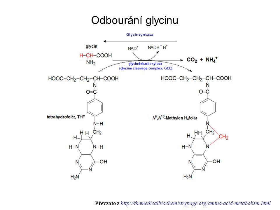 Odbourání glycinu Glycinsyntasa.