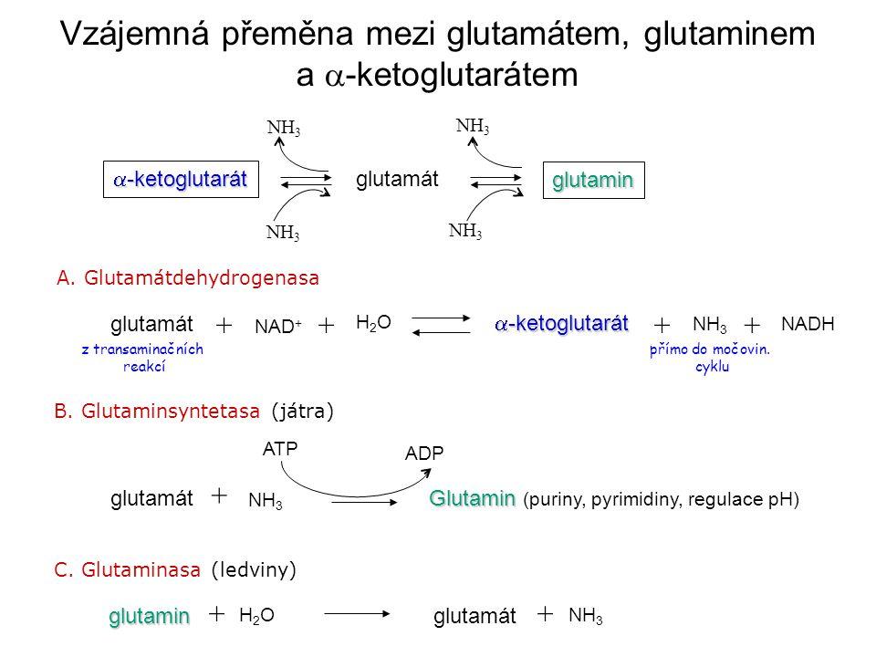 Vzájemná přeměna mezi glutamátem, glutaminem a a-ketoglutarátem