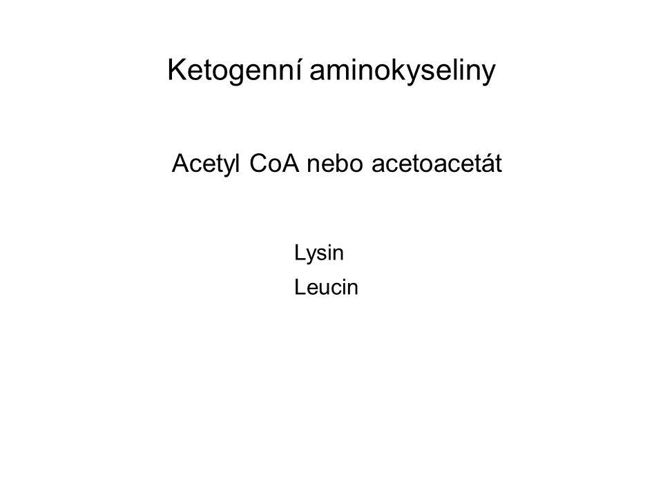 Ketogenní aminokyseliny