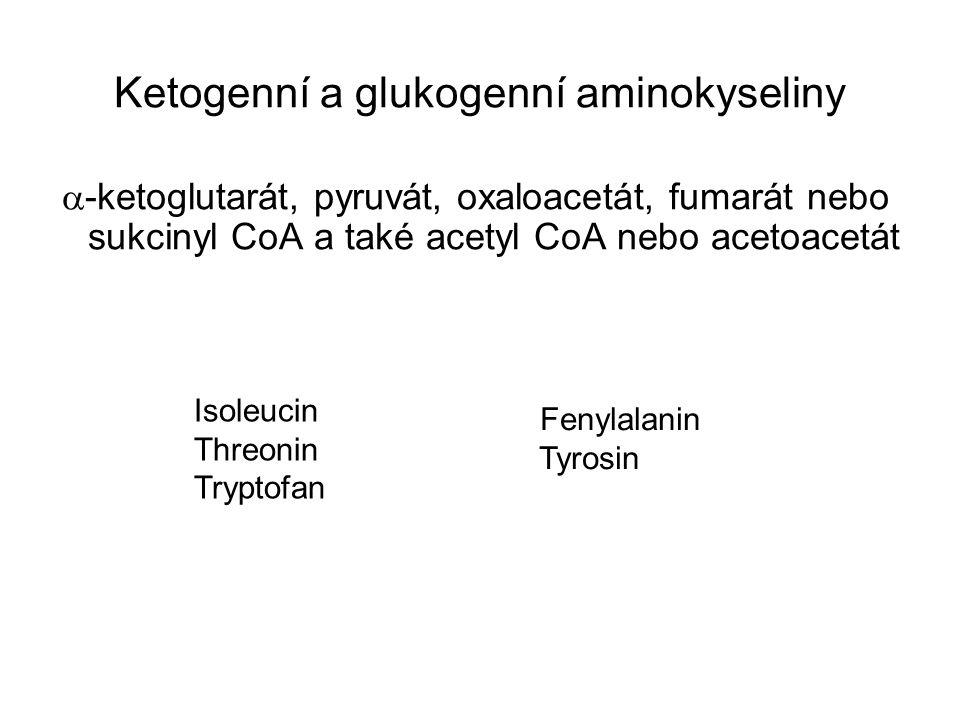 Ketogenní a glukogenní aminokyseliny