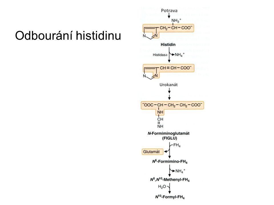 Odbourání histidinu