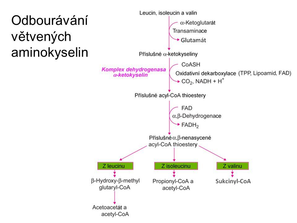 Odbourávání větvených aminokyselin