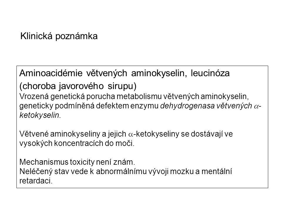 Aminoacidémie větvených aminokyselin, leucinóza