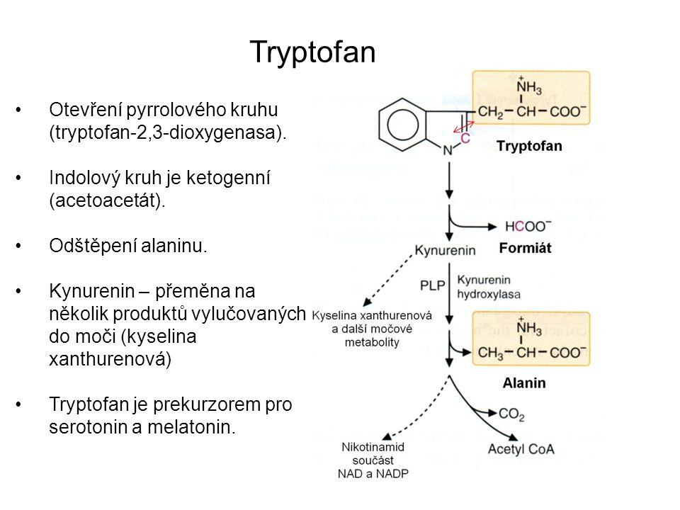 Tryptofan Otevření pyrrolového kruhu (tryptofan-2,3-dioxygenasa).
