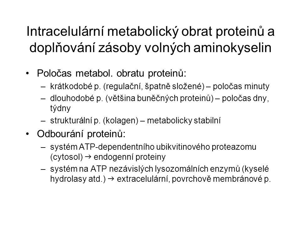 Intracelulární metabolický obrat proteinů a doplňování zásoby volných aminokyselin