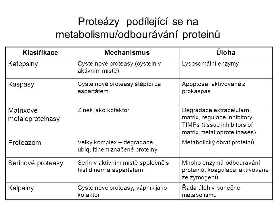 Proteázy podílející se na metabolismu/odbourávání proteinů