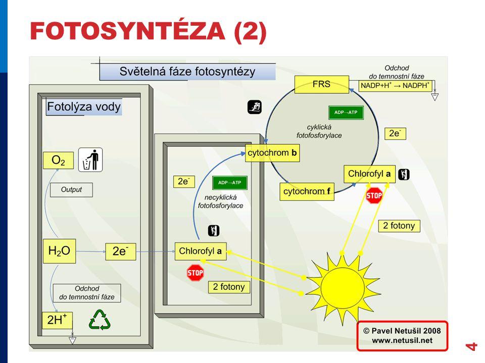 fotosyntéza (2)